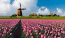 Kiruccanás a tulipánok földjére